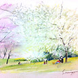 満開の桜の下で