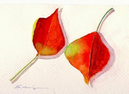 二枚のナンキンハゼの葉